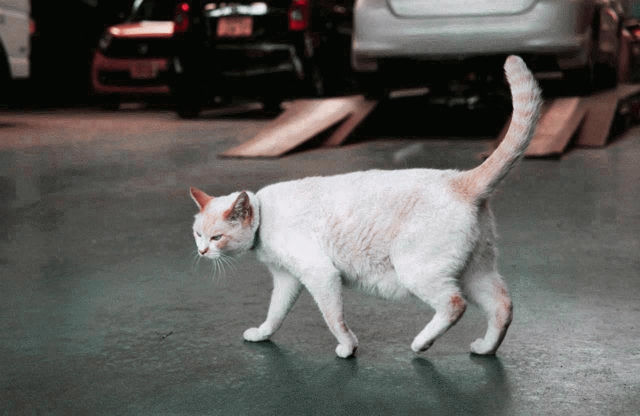 猫好きなお客様はシロを見掛けたら撫でてあげてください